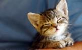 Cum castigi increderea pisicii tale