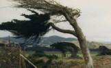 ANM a emis COD GALBEN de vânt puternic pentru opt judeţe. Vezi care sunt zonele vizate