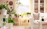 Ce plante poti sa pastrezi in dormitor