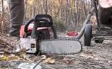 Batarci-Tăiere fără drept de arbori