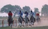 350 de cai într-un show spectaculos, în weekend, la Herghelia Mangalia