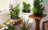 Moduri prin care sa-ti improspatezi aerul in casa