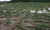 Giurgiu: Localităţi fără curent electric, străzi şi gospodării inundate, în urma unei furtuni