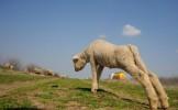 Infecţie cu ANTRAX la oile din Ungaria