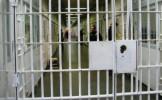 Mandate  de executare a pedepsei