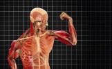 A fost descoperită o nouă componentă a corpului uman! Manualele de anatomie trebuie RESCRISE!