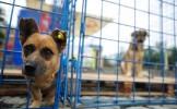 Câinii fără stăpân, tragedia unei familii, problema tuturor
