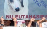 CCR a declarat CONSTITUŢIONALĂ legea care permite EUTANASIEREA câinilor fără stăpân. Zeci de persoan...