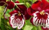 Ce trebuie sa stii despre ingrijirea orhideelor