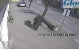 Imagini ŞOCANTE (+18)! Atacul sălbatic al unui pitbull asupra unei pisici gestante (VIDEO)