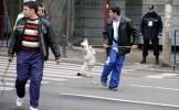 Primăria Voluntari: Cei aproximativ 2.000 de câini de pe domeniul public, ridicaţi începând de luni